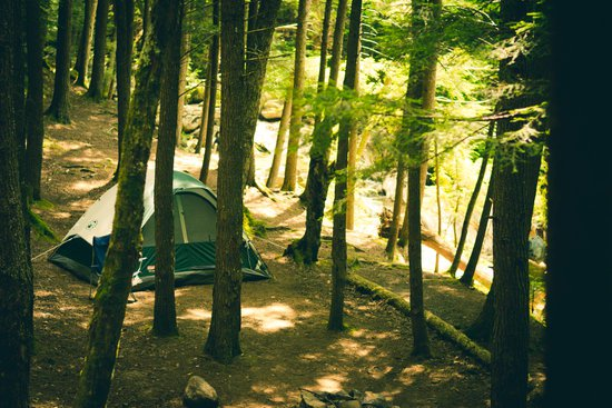 Terrain pour tente (1 tente)